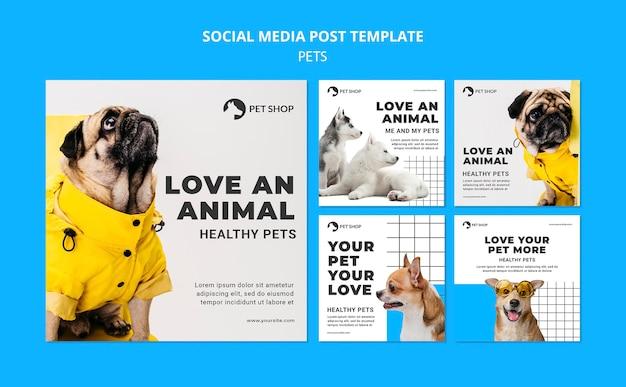 Modèles de publications d'animaux avec photo