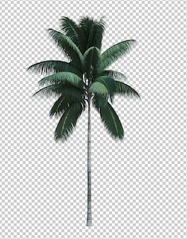 Nature objet cocotier isolé blanc