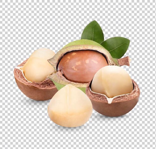 Noix de macadamia avec des feuilles isolées premiun psd