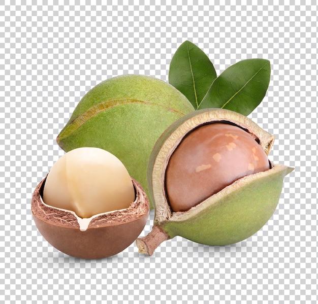Noix de macadamia avec feuilles isolées