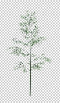 Objet nature arbre bambou isolé