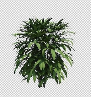 Objet nature arbre de brousse isolé fond blanc