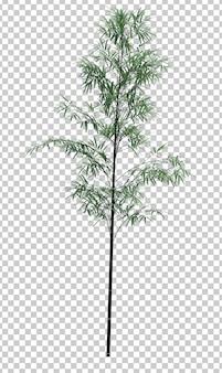 Objet nature bambou arbre isolé blanc espace