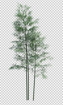 Objet nature bambou arbre isolé blanc