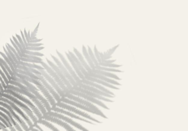 L'ombre de l'herbe des champs sur le mur blanc