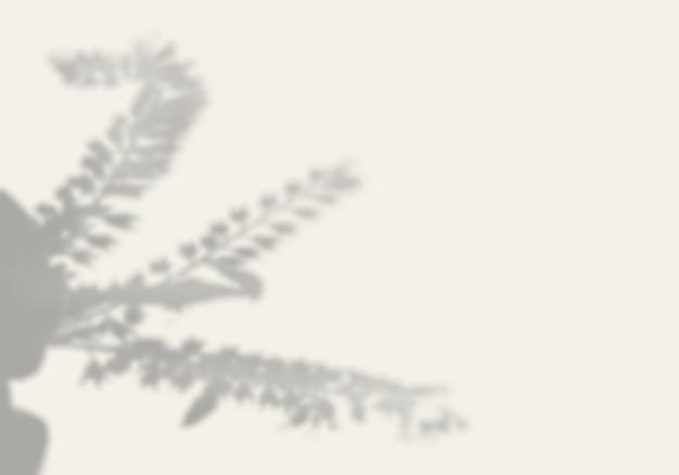 L'ombre d'une plante exotique sur un mur blanc.