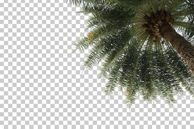 Palmier au premier plan