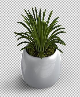 Plante isolée en pot