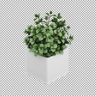 Plante isométrique