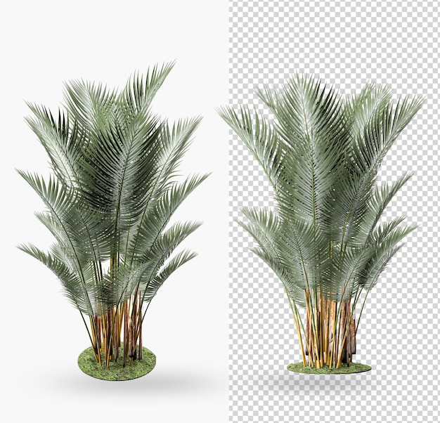 Plante en pot décoration et design d'intérieur