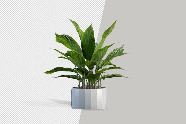Plante en rendu 3d isolé