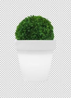 Plante verte sur un pot de fleur blanche isolé sur fond blanc