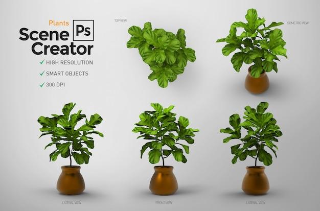 Les plantes. créateur de scène.