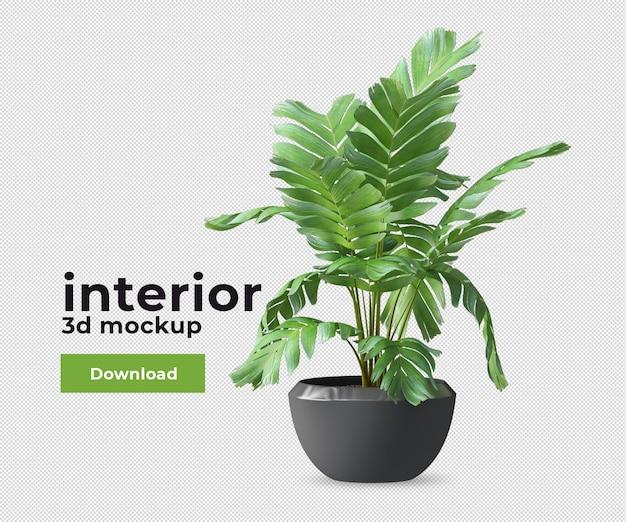 Plantes décoratives en pots