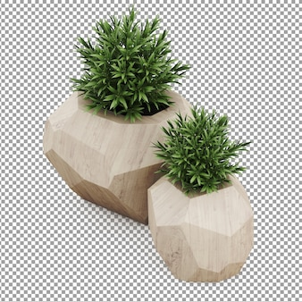 Plantes isométriques