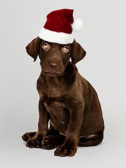 Portrait d'un mignon chiot labrador retriever coiffé d'un bonnet de noel