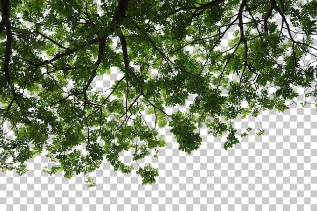 Premier plan de l'arbre