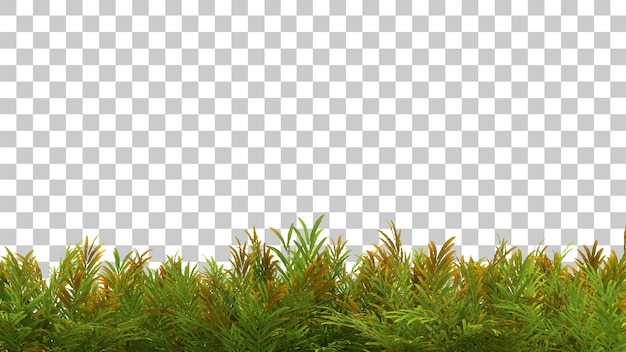 Le rendu 3d de l'acrostichum aureum plante au premier plan isolé