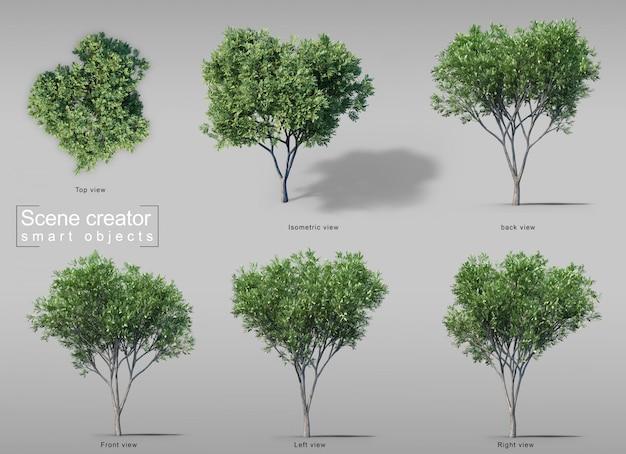 Rendu 3d d'arbres de bois de carotte