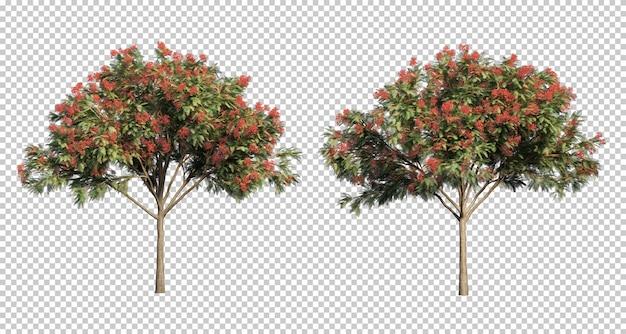 Rendu 3d d'arbres delonix regia
