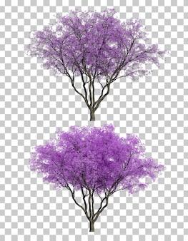 Rendu 3d d'arbres jacaranda mimosifolia