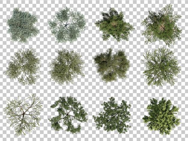 Rendu 3d d'arbres vue de dessus