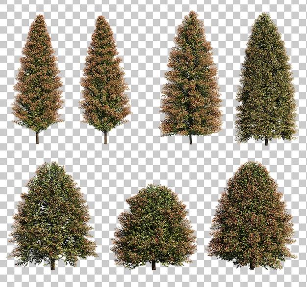 Rendu 3d d'arbres