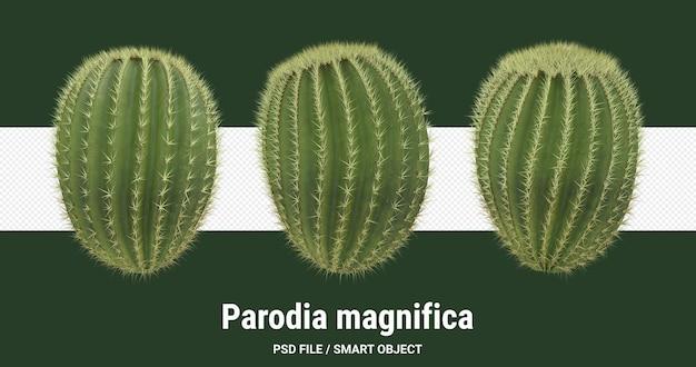 Rendu 3d de cactus isolé