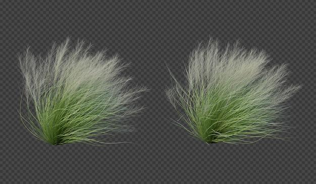 Rendu 3d de coup d'herbe de plume mexicaine