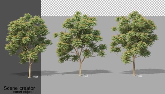 Rendu 3d de divers types d'arbres isolés