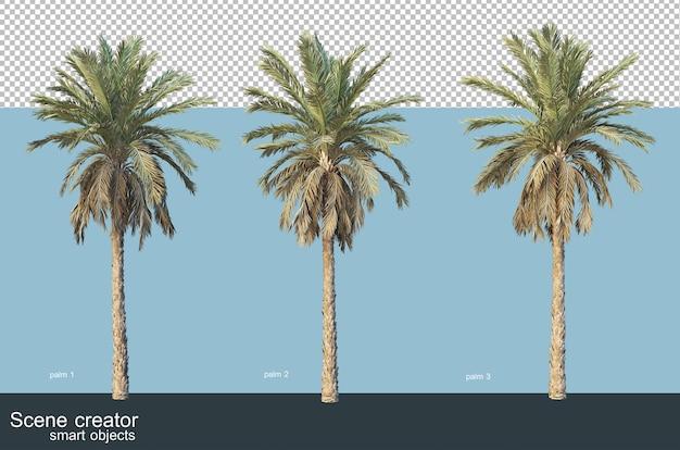 Rendu 3d de divers types de palmiers