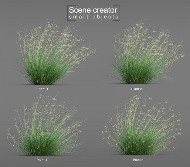 Rendu 3d du créateur de scène de coup d'herbe grama bleu ambition blonde