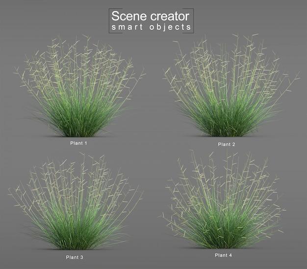 Rendu 3d du créateur de scène d'herbe grama blonde ambition blue