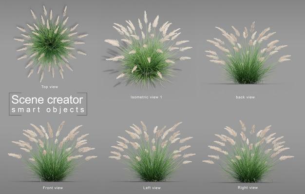 Rendu 3d du créateur de scène silver spike grass