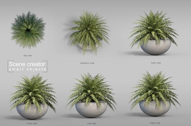 Le rendu 3d de fougère en pot plante créateur de scène