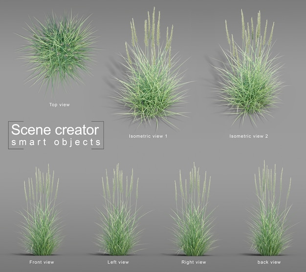 Rendu 3d de great basin wildrye grass scene creator