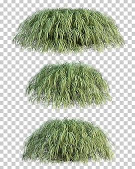 Le rendu 3d de l'herbe de la forêt japonaise