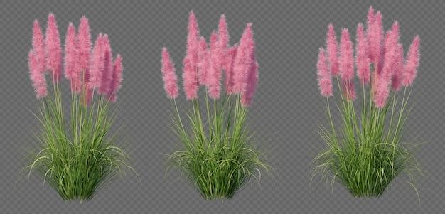 Le rendu 3d de l'herbe de la pampa naine