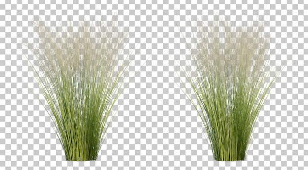 Rendu 3d d'herbe de plumes mexicaine