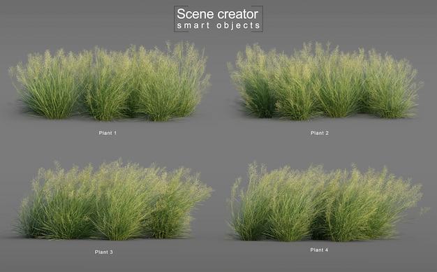 Le rendu 3d de l'herbe de riz indien