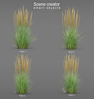 Le rendu 3d de l'herbe de roseau plume karl foerster