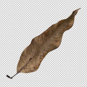 Rendu isolé des feuilles sèches brunes