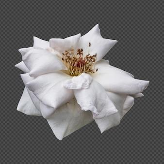 Rendu isolé de fleur rose blanche