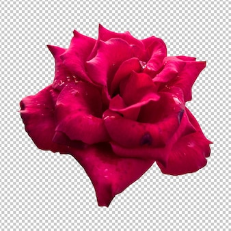 Rendu isolé de fleur rose marron