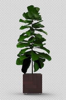 Rendu de plante isolée. plante en pot. vue de face isométrique. 3d. créateur de scène.