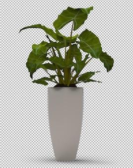 Rendu de plante isolée. vue de face isométrique. 3d.