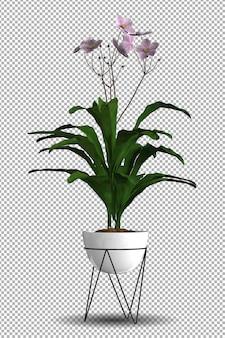 Rendu de plante isolée avec vue isométrique