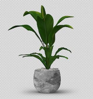 Rendu de plante isolée