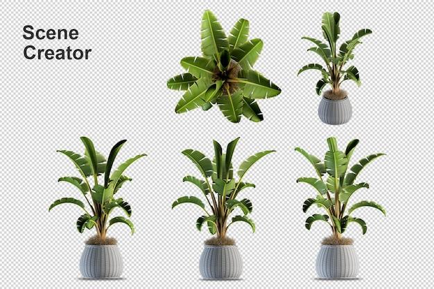Ressource de création de scènes de plantes