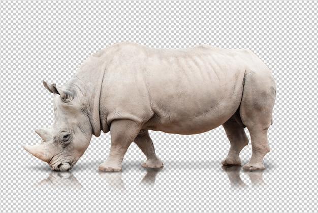 Rhinocéros réaliste